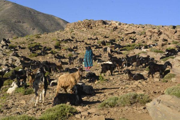 walking with Berber nomads