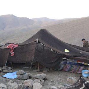 nomad homestay