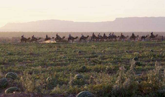camel riding in Zagora